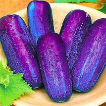 PREMIUM 100Pcs/Pack Purple Cucumber Seeds Garden Farm Vegetable Plants S... - $4.49