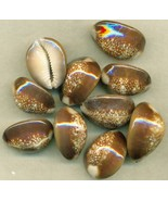 Sea Shell Shell Craft Snakehead Cowry - $13.59