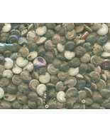 Sea Shell Craft Tiny Shells Lot 2 - $13.59