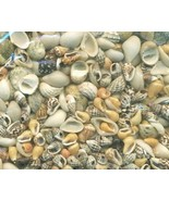 Sea Shell Craft Tiny Shells Lot 3 - $13.59