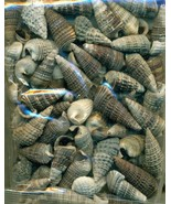 Sea Shell Craft Small Shells Lot  2 - $13.59