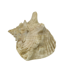 Sea Shell Beach Home Decor Nautical Seashell  - $24.99