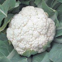 100 Seeds of Snow Crown Hybrid Cauliflower - $17.82