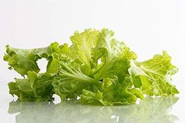 Tango Lettuce Leaf Seeds - 100 Count Seed Pack - Non-GMO - A Loose Leaf Variety  - $2.99