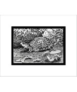 Eastern Box Turtle Pen and Ink Print, Reptile - $24.00