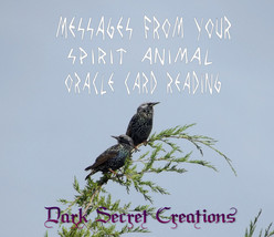 Messages From Your Spirit Animal Oracle Card Reading, PDF Email Delivery - $5.00