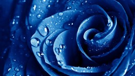 PSYCHIC BLUE ROSE-READING- ONE QUESTION 10.75 - $10.75