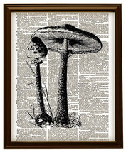 Tall MUSHROOMS Fungus Plants Dictionary Page Ar... - $12.00