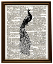 PEACOCK BIRD Beautiful Feathered Animal Vintage... - $12.00
