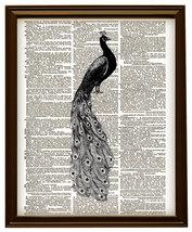 PEACOCK BIRD Beautiful Feathered Animal Vintage... - $12.00