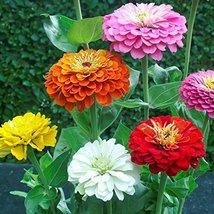 "38k Seeds or 1/2 LB Zinnia Flower Seed Mix, ""Zin Master"", 6 Species - $39.60"