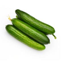 Rare Heirloom Dutch Fruit Cucumber Organic Seeds, 5pcs Seeds / Pack - $3.95