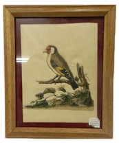 Framed Picture Hand Crafted Quilted Red Head Woodpecker Wildlife Art Vin... - $39.17