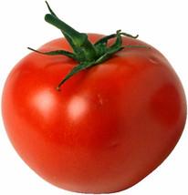 Tomato Seeds - Homestead, Heirloom, Non-Gmo Tomatoes, Prolific & Dependable 50ct - $21.59