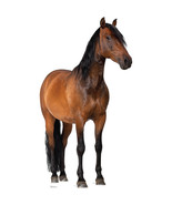 HORSE FARM ANIMAL LIFESIZE CARDBOARD STANDUP STANDEE CUTOUT PROP 1491 - $39.95