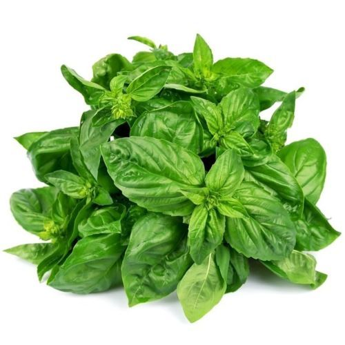 Primary image for SHIP From US, 1/8 ounce 2500 Seeds Sweet Basil Herb, DIY Herb Seeds ZJ01