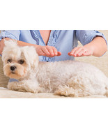 7 SESSIONS REIKI DISTANT HEALINGS FOR YOUR DOG, MAKE HER OR HIM HAPPY - $16.57