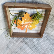 """Fall Decor Plaque, live air plants, Wooden shadow box, autumn leaf """"Happy Fall"""" image 7"""