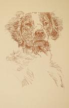 Brittany Spaniel Dog Art Portrait Print 78 Klin... - $49.45