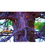 Bleu' Bark Fantasy Fine Art Photograph 24 x 36 ... - $495.00