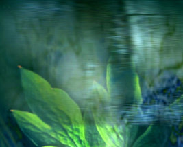 Rest Fine Art Photograph 24 x 30 Giclee Leaf Gr... - $150.00