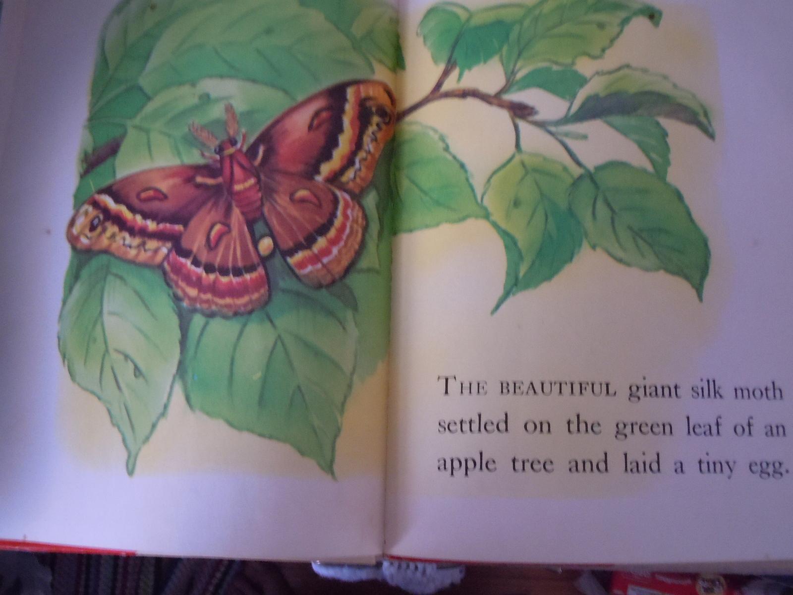 Rand McNally Big Edition A Moth Is Born Elf Book by Herbert Walker