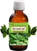 Bay Laurel Leaf Oil- Pure Natural Essential Oil- 50ml Laurus nobilis by Bangota - $21.42