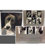 Shelter Dogs Merrell Traer Scott Brand New Sealed ISBN 9781858944082 - $9.99
