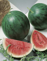 50 SEEDS Sugar Baby Watermelon Seeds  - $11.99