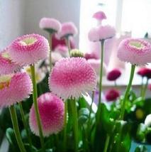 Indoor Plants Very Easy Happy Farm Spring 20 Pcs. Ice Cream Little bonsa... - $2.99