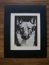 German Shepherd Dog Print Morgan Dennis Head Shot 1946 Bookplate 11x14 M... - $18.74