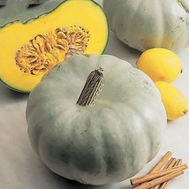 Crown Squash 10 Seeds professional pack whitish gray skin edible vegetables - $3.99