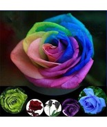50 Rose Seeds Black Rainbow Blue Red Purple Green #B Petal Plant Garden ... - $62,20 MXN