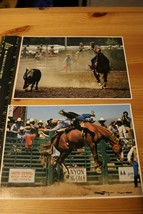 2 Color & Clarity Rodeo Photos - $14.25