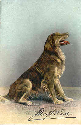 Primary image for A Retriever vintage 1906 Post Card