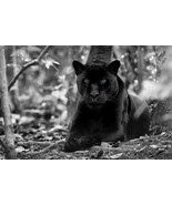 Black Panther Home Decor Canvas Print, choose your size. - $5.63+