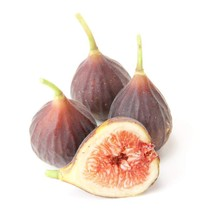 Fig Chicago Hardy Fruit Tree Rare Grown in the USA - $24.99