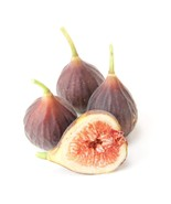 Fig Chicago Hardy Fruit Tree Rare Grown in the USA - $39.99
