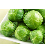 BRUSSELS SPROUT SEEDS - FRESH 50 SEEDS - BRUSSEL SPROUTS  - $1.49