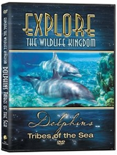 Explore the wildlife kingdom dolphins   tribes of the sea