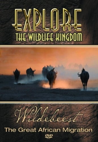 Explore the wildlife kingdom wildebeest