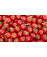 CHERRY TOMATOE VEGETABLE SEEDS 10 FRESH SEEDS F... - $1.49