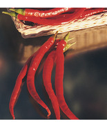CAYENNE LONG PEPPER SEEDS FRESH 20 SEEDS  - $1.49