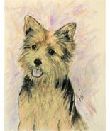Norwich Terrier Dog Art Pastel Drawing Solomon - $90.00
