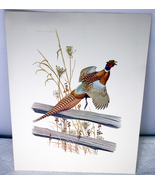 11 X 14 Richard Eckelberry Ring-Necked Pheasant Print (Reproduction) - $3.95