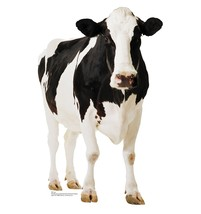 Cow Black White Life Size Cardboard Standup Cutout New Licensed 709 - $39.95