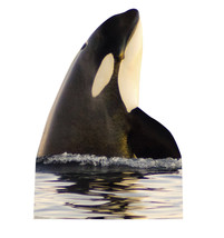 Killer Whale Orca Life Sized Cardboard Standup Standee Cutout 1987 - $39.95