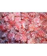 Colombina Peppermint Starlight Mints, 5-Lb Bag - $18.23
