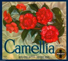 Camellia Orange Fruit Crate Label Vintage Art Print Redlands Orange Association - $9.88