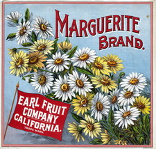 Marguerite  Fruit Crate Label Art  Earl Fruit Co Santa Barbara CA Daisy Flower - $9.87